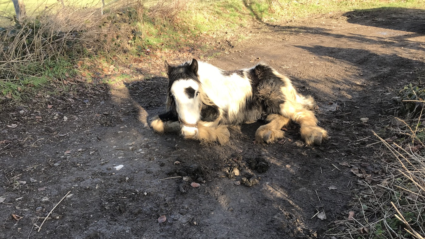 Dying pony dumped too weak to survive was 'surrounded by love' in his last hours - Horse & Hound