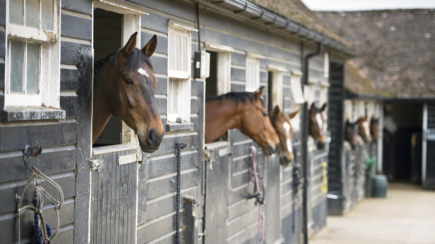 2 Things Every Horse Breeder Needs