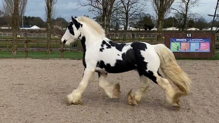 rescue pony