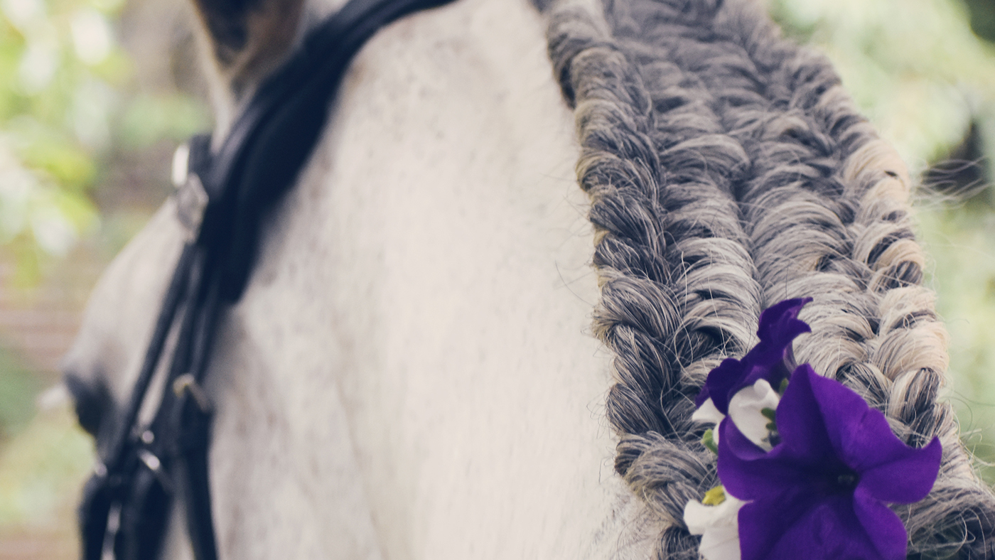 All in a day's work: Equine hairdresser Lucie Holt *H&H Plus* - Horse & Hound