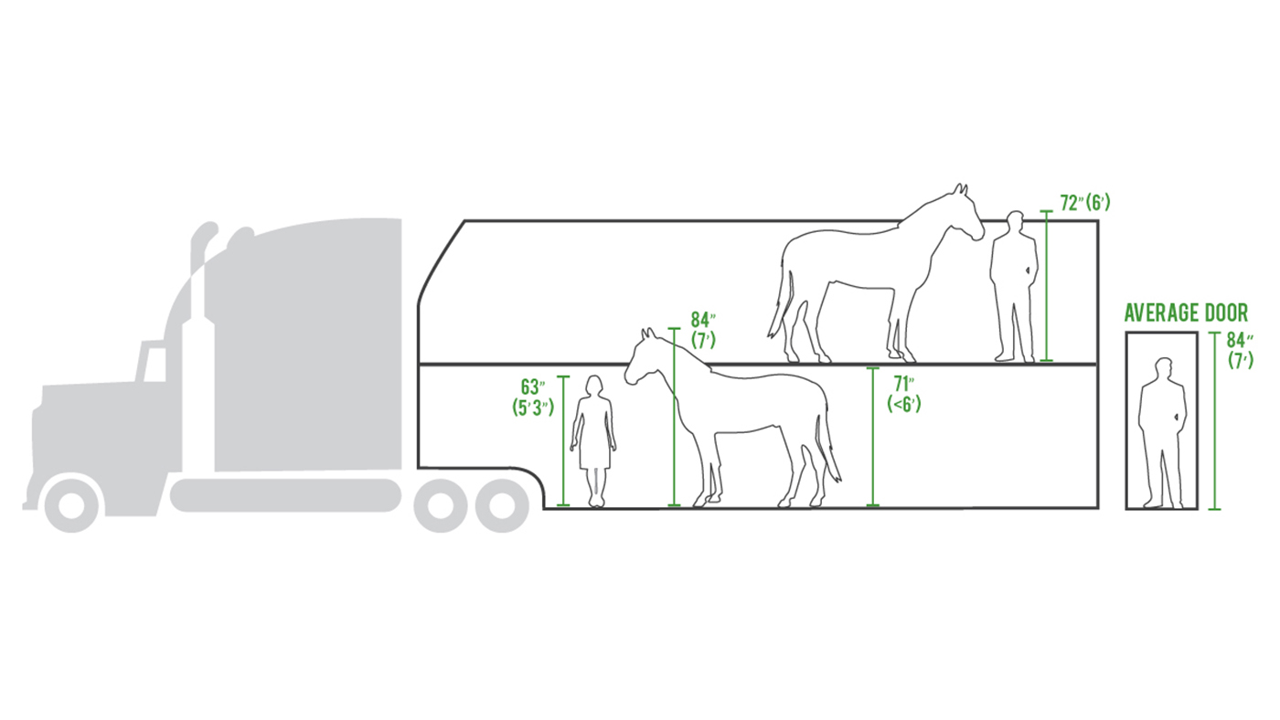 US calls for end to 'inhumane' double-decker trailers for horses - Horse & Hound