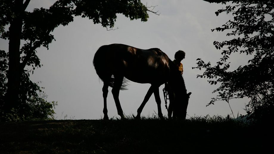 B3CRYM Silhouette of a horse and person. The horse is grazing