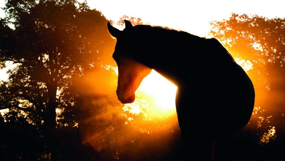 C1E857 Arabian horse silhouette against hazy sunrise with rays in fog