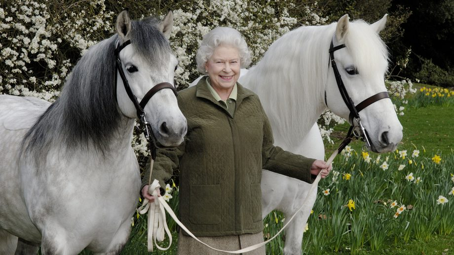 These Highland ponies are among HM The Queen's favourite horses