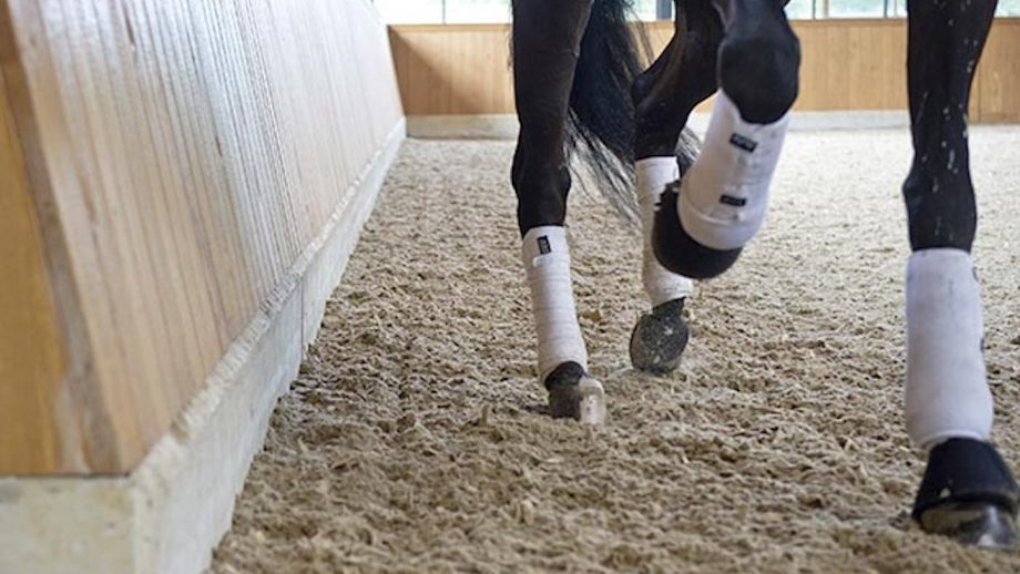 a horse working in an indoor arena wearing protective boots