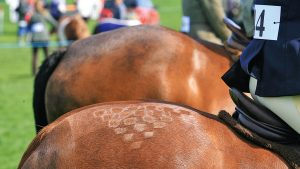 quarter marks on ponies in showing class