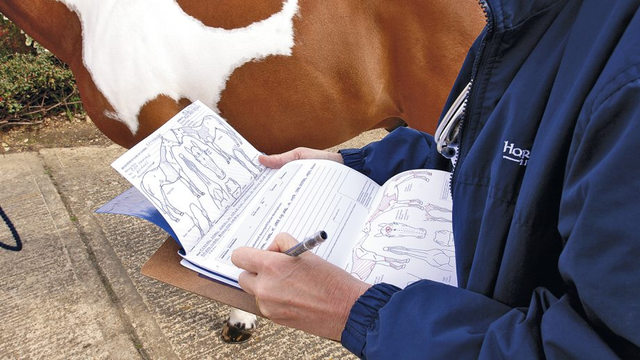 Equine vets pre-purchase exam