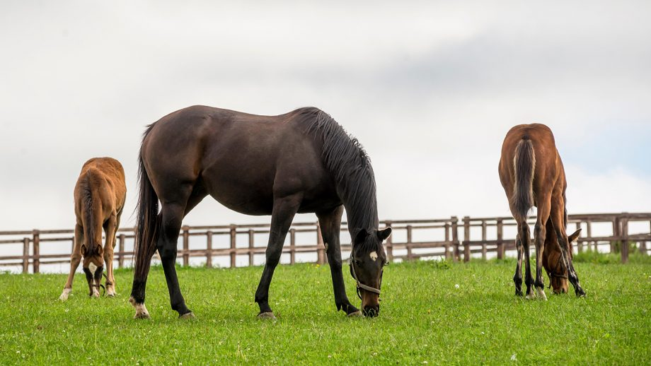 EU animal health law horses