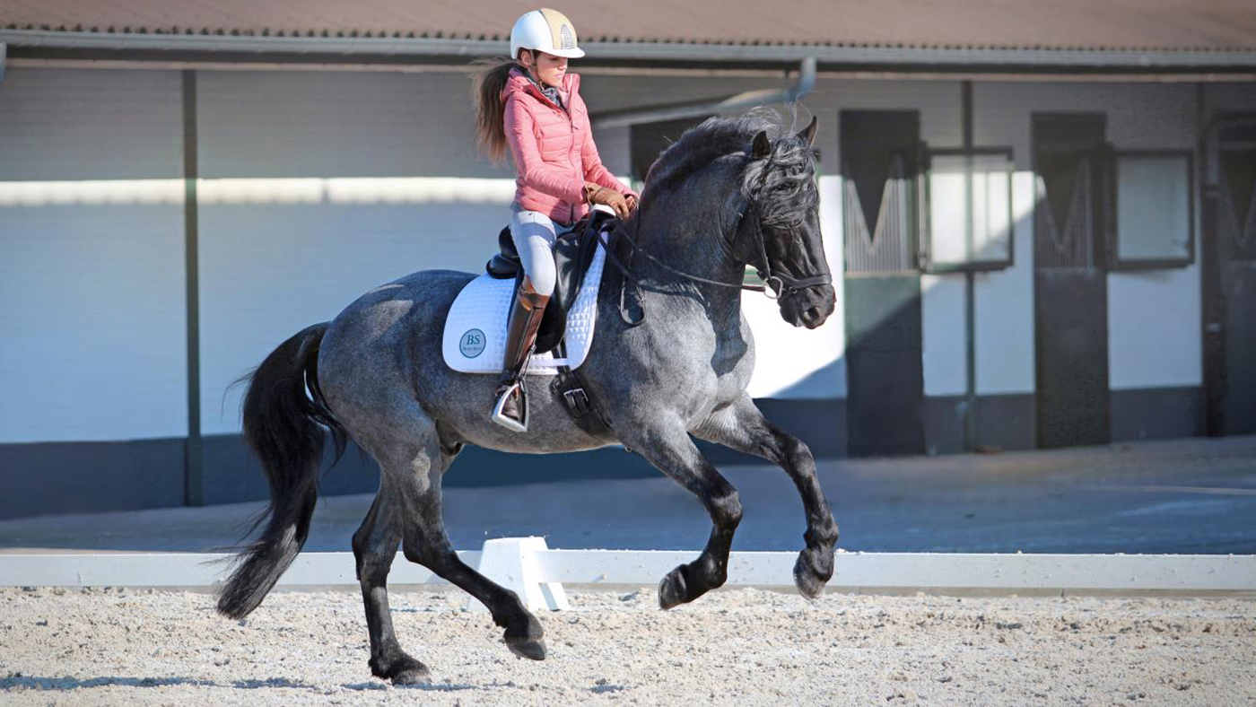 Meet The Striking Grand Prix Stallion Whose Breed You Ve Probably Never Heard Of Horse Hound