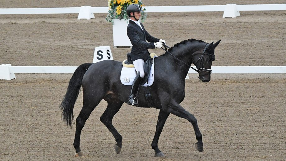 Calum Whitworth rides Hawtins Barolo to the medium gold title at the Winter Dressage Championships 2020