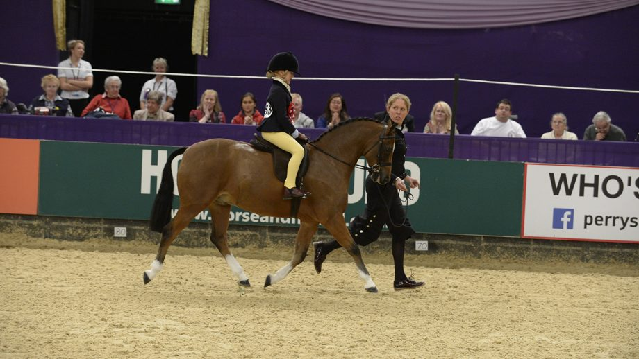 Show pony specialist Sarah Newbould with Joebex Chitty Chitty Bang Bang at HOYS 2013.