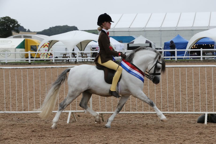 Thistledown El Toro (Lilly Brennan) on his way to winning the Olympia small breeds championship at the BSPS Summer Championships 2020 at Arena UK