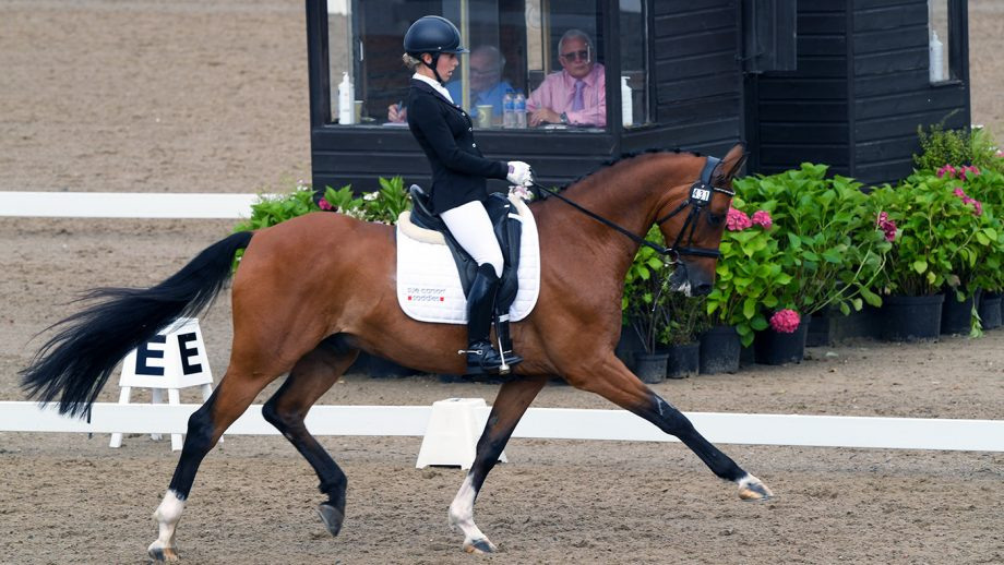 Victoria Maw rides Benito Dorato to elementary gold freestyle victory at the Winter Dressage Championships 2020