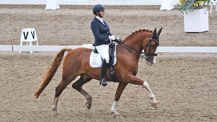 Katharine Lewis and Albertho B land the advanced medium silver freestyle at the Winter Dressage Championships 2020