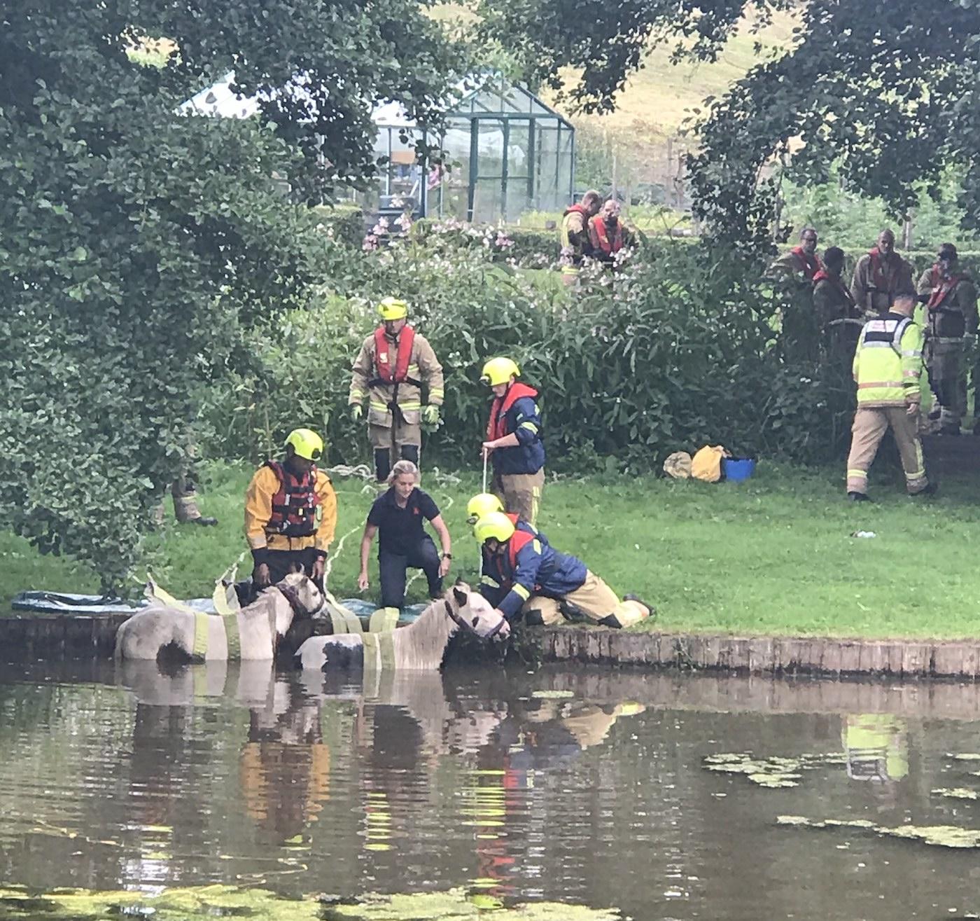 Os pôneis resgatados tiveram que ser salvos novamente após a queda do lago do jardim 1