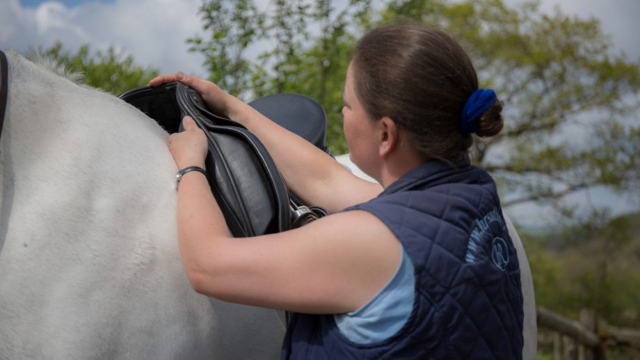 Hartpury has joined forces with the Society of Master Saddlers, the Worshipful Company of Loriners and the Worshipful Company of Saddlers in the interest of training, education and research into horse-human interactions and partnerships