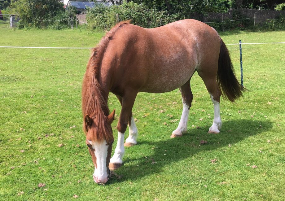 Horseworld rescue mare Tequila