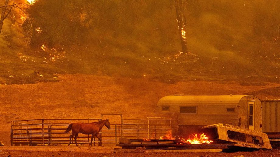 US Wildfires: A horse runs by a stall as flames from the Hennessey approach a property in the Spanish Flat area of Napa, California on August 18, 2020