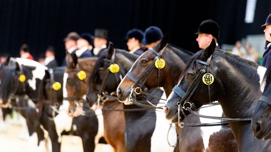 Horse of the Year Show (HOYS) has covid protocols in place.