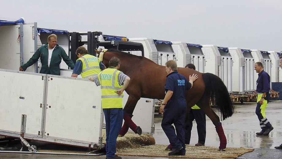 Digital horse passports could make cross-border travel after Brexit much easier