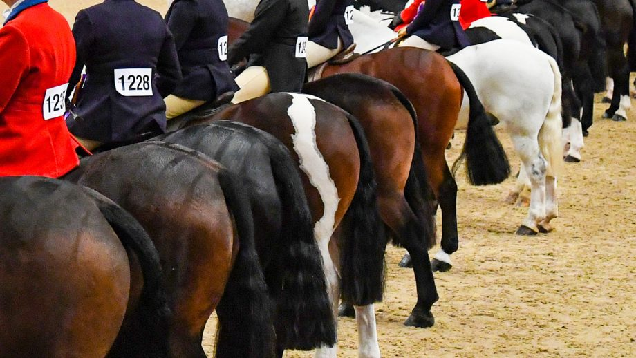 The British Show Horse Association has introduced new anti-doping rules for showing.