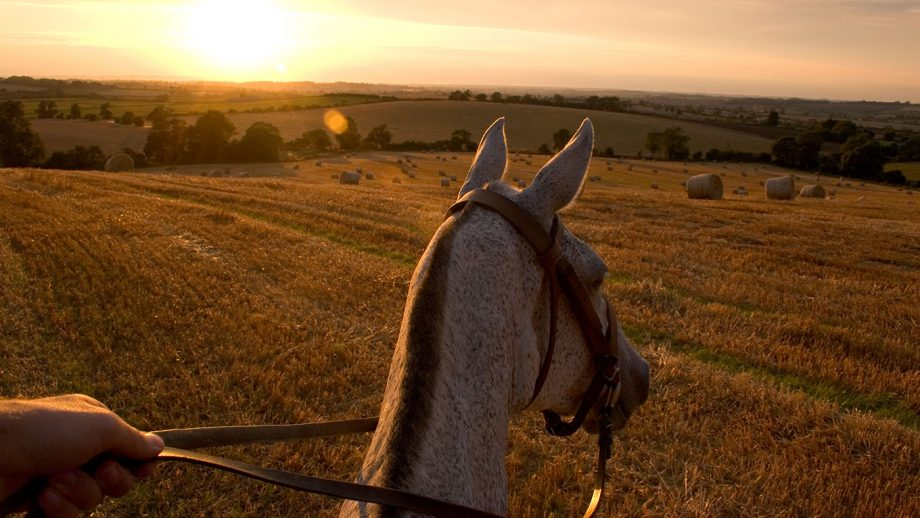 Horse riding over open stubble fields in Leicestershire