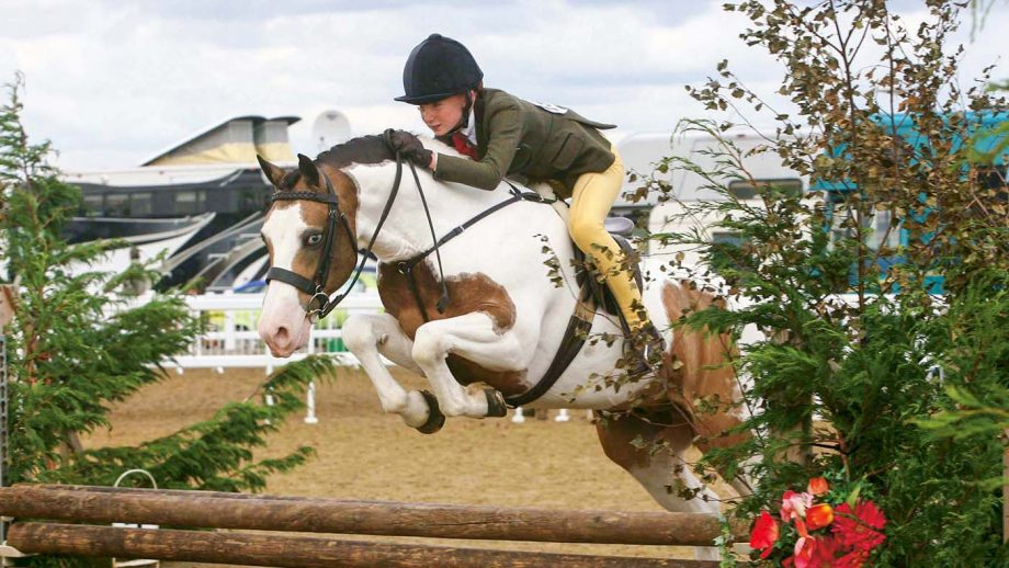 BSPS working hunter pony