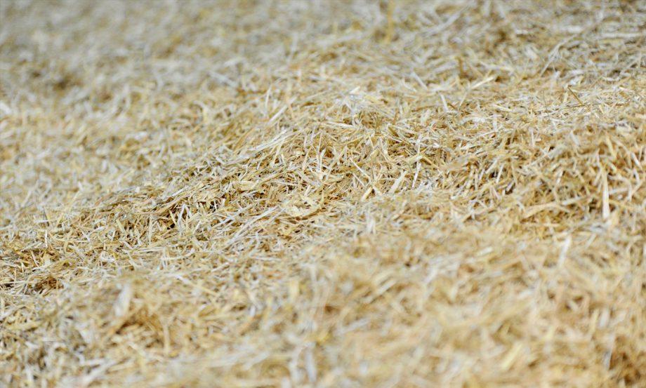Nedz-Beds-Hay-image-1400x788