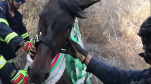 horse rescued ravine california