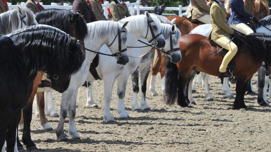 Mid/Counties Show 06.06.15 HOYS M & M Mini Champs. line up lining up