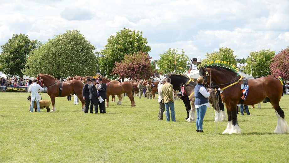 The Suffolk Show has stated it will not take place in 2021.