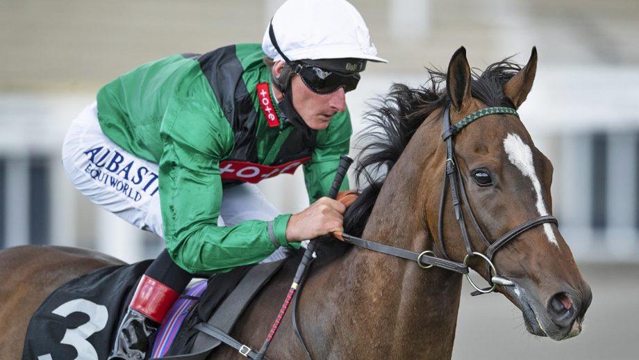 Retired racehorse Limato