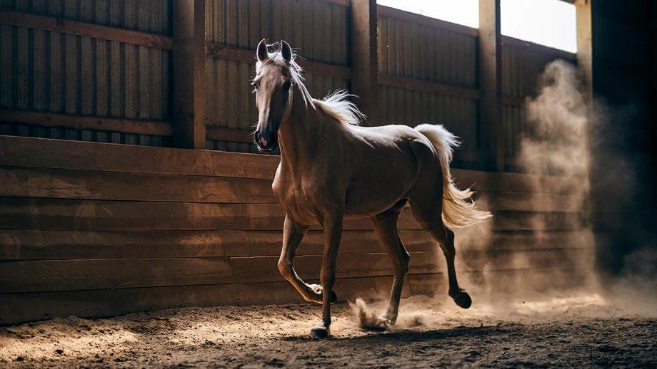 Winter respiratory health of horses