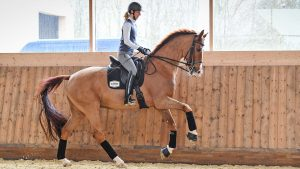 Laura Tomlinson training tips AAA with Laura Tomlinson (with her second horse during the shoot) at her yard; Cranmore Farm, near Tetbury in Gloucestershire in the UK, on the 17th March 2020