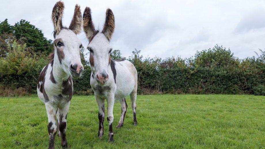 Donkeys rescued during Storm Dennis
