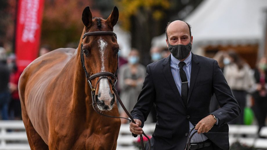 Tim Price and Ringwood Sky Boy at the Pau Horse Trials first trot-up 2020