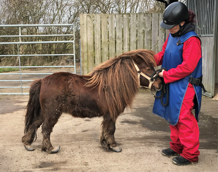 Neglected Shetland pony rescued