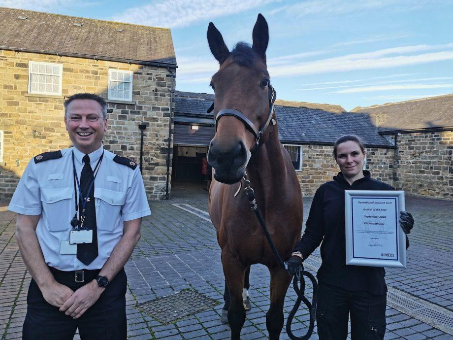 Police horse awarded
