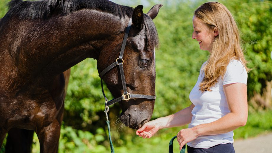 equine therapy mental health