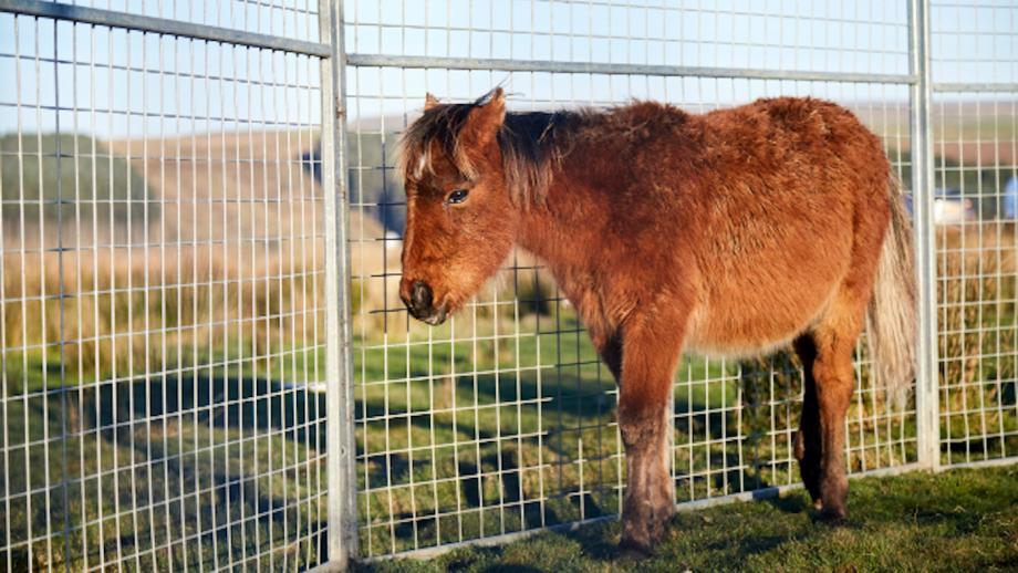 RSPCA horse rescue Gelligaer Common