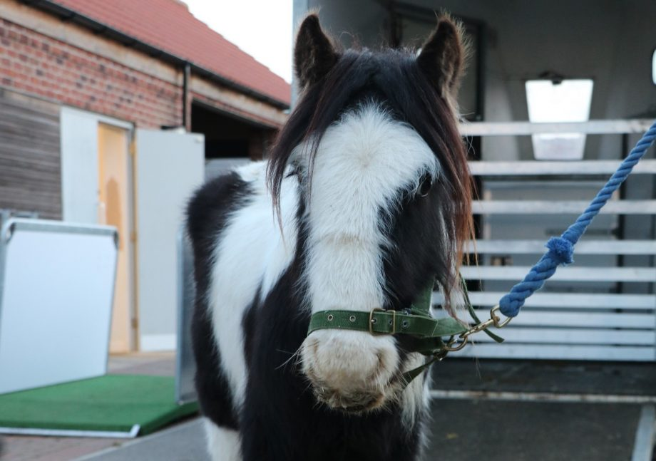 Bransby Horses rescue horse put down