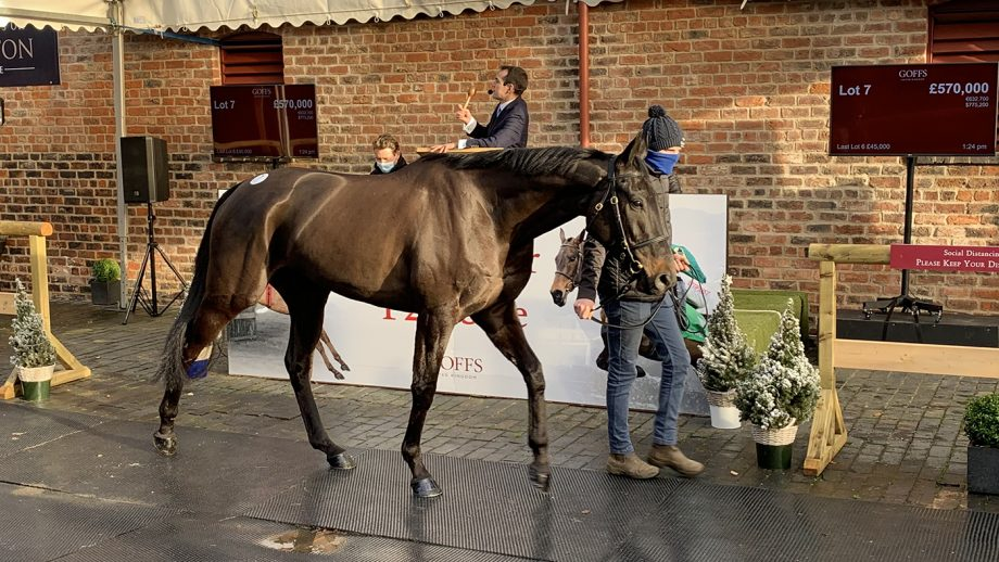 Classic Getaway sold for £570,000 at Yorton Farm on 17 December