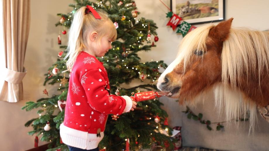 Christmas film Emma Massingale Shetland pony