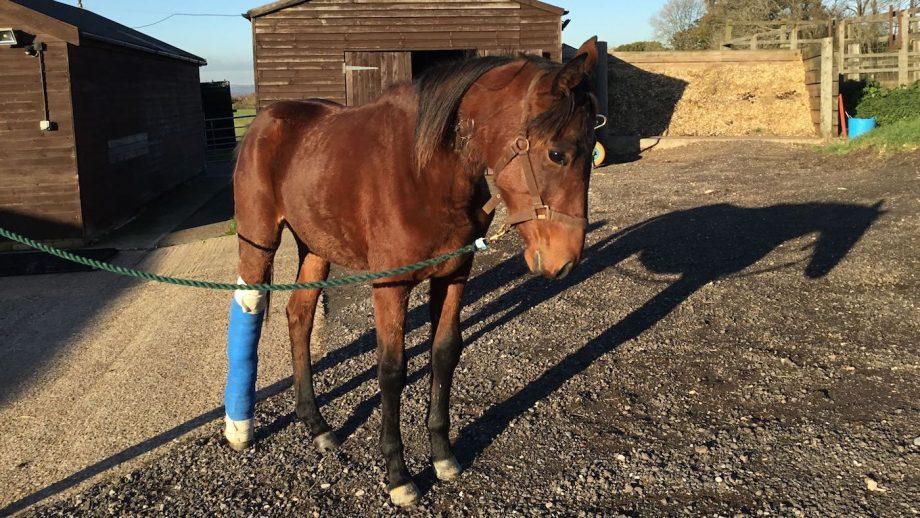 RSPCA rescue injured horse
