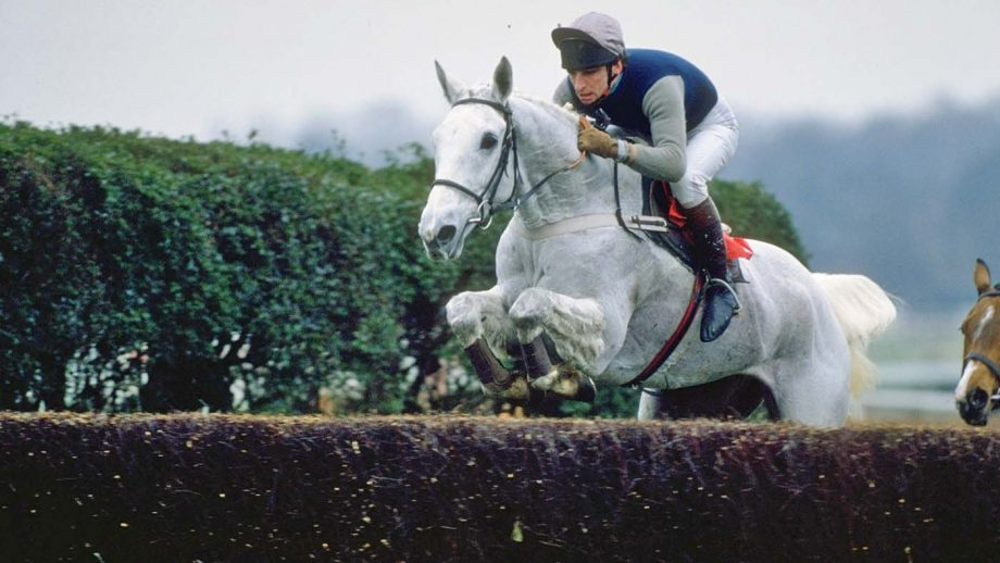 1989: Desert Orchid jumps a fence during a race at Sandown Park racecourse in Esher, Surrey, England. Mandatory Credit: Allsport UK /Allsport
