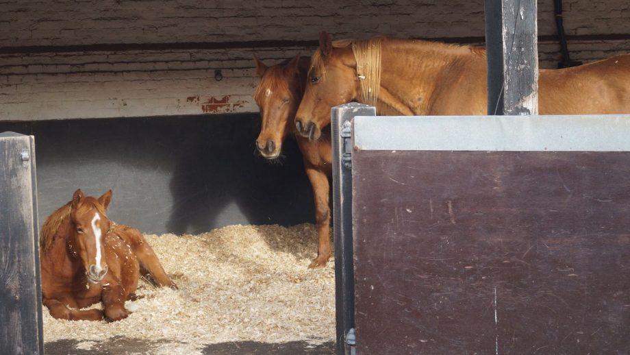 RSPCA horse rescue case