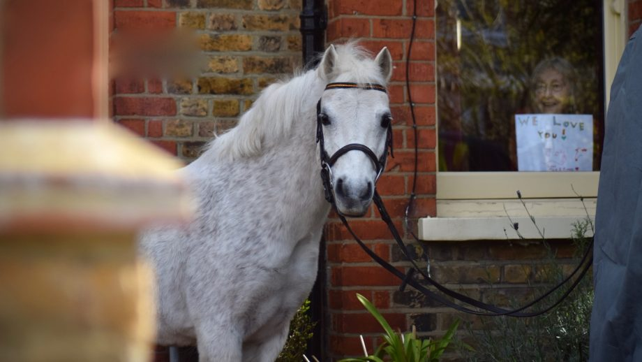 park lane stables crowdfunding