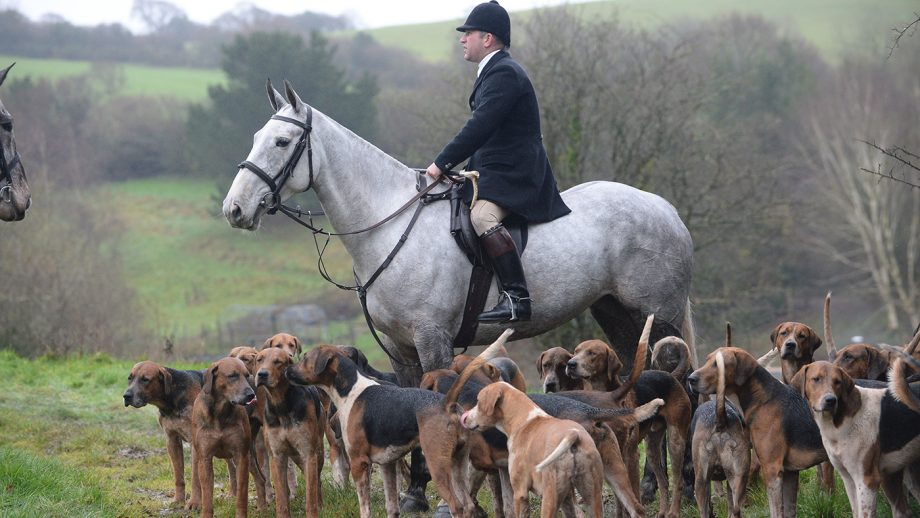 Jason Marles Master and Huntman of the Eggesford with his hounds during the meet of the Eggesford Hunt in the village of North Tawton near Okenhampton in Devon in the UK, on the 21st December 2020