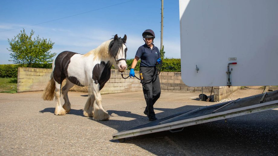 World Horse Welfare rehoming horses