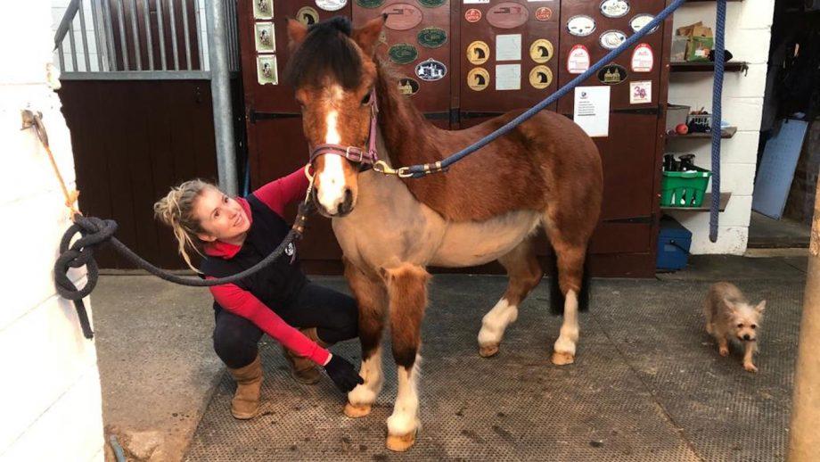 equestrian centre home-schooling